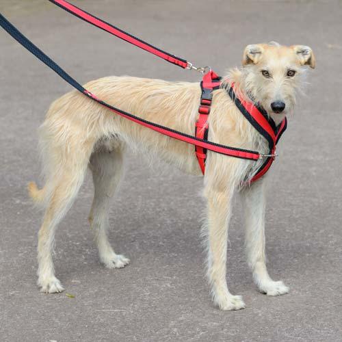 dog-harness-20
